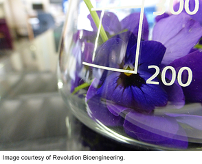 Flower-in-a-flask-synthetic-biology