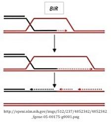 break-induced repair pathway