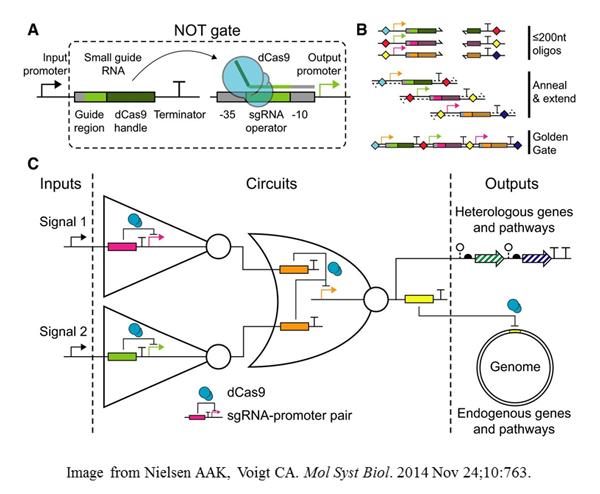 Voigt-CRISPR-Cas-genetic-circuits
