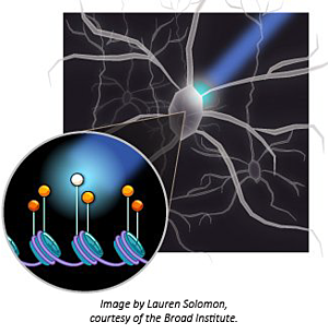 optogenetics-LITE-plasmids