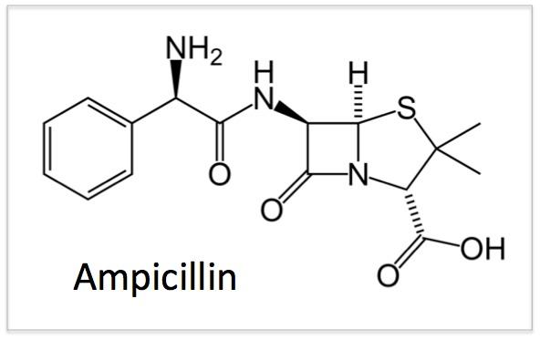 Ampcillin