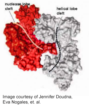 CRISPR-Cas9-Crystal-Structure-Doudna-Nagles