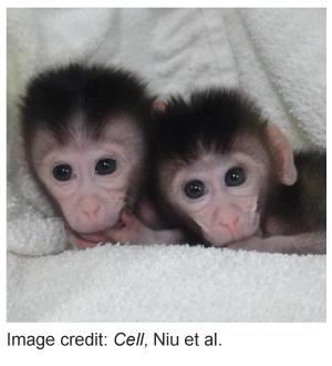 CRISPR-Cas9-monkeys-Niu