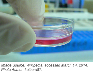 Cell-culture-for-mammalian-plasmid-transfection