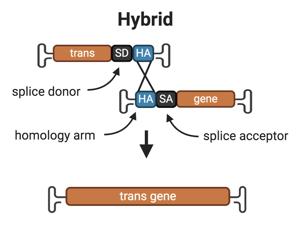 Hybrid-split-AAV
