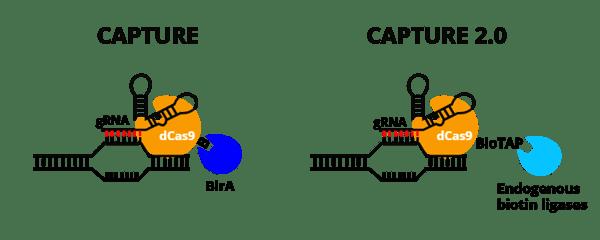 CAPTURE vs CAPTURE 2.0