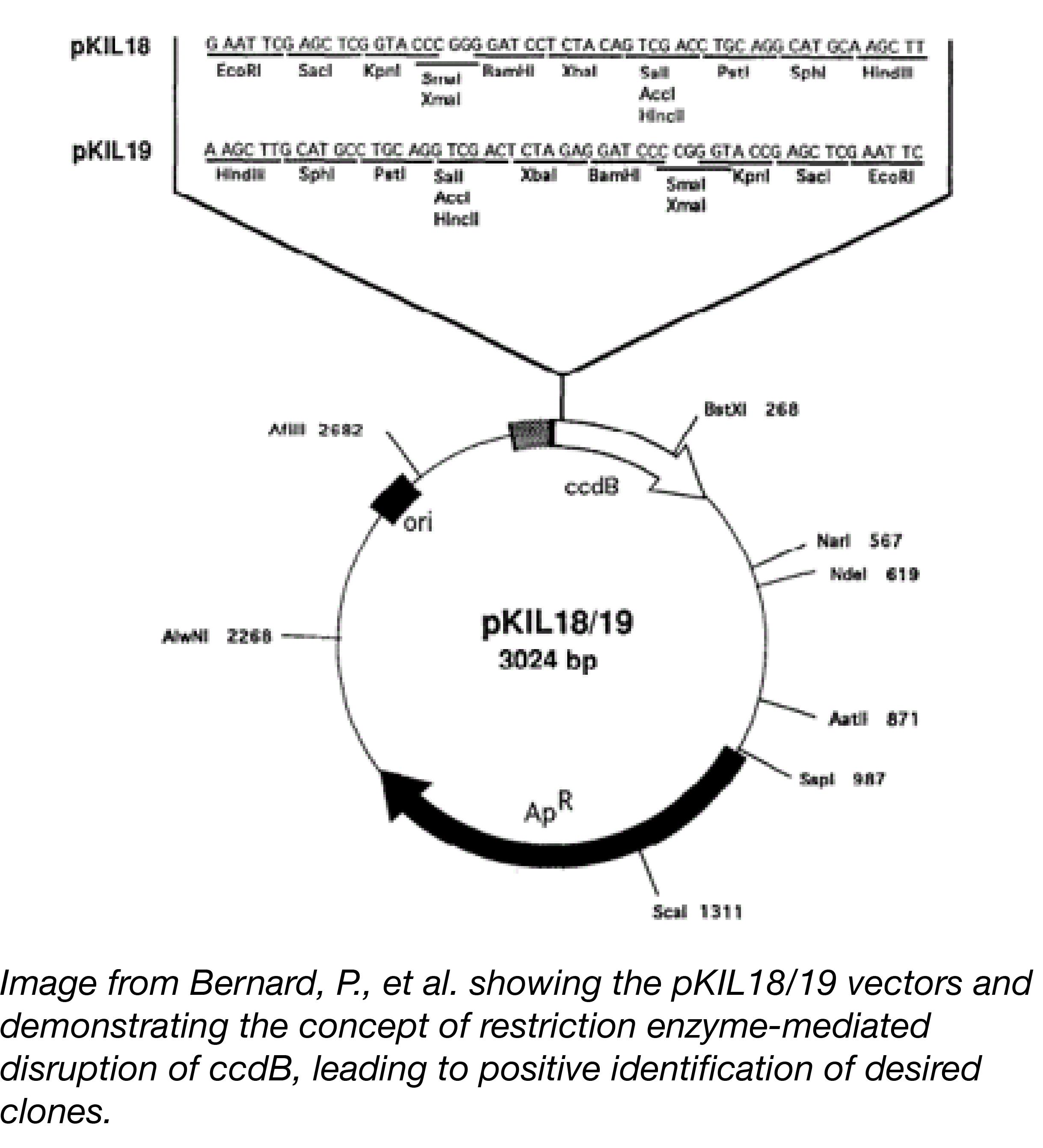 ccdB Post Figure 1-01.png