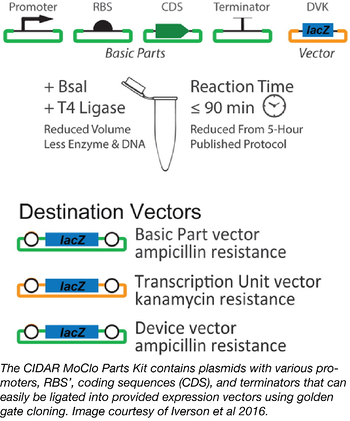 CIDAR MoClo parts kit