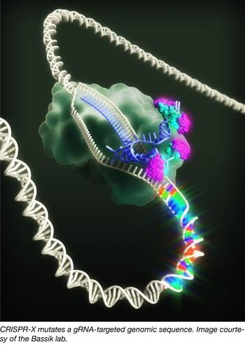 CRISPR-X-01.png