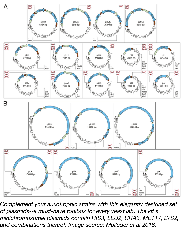 Yeast Prototrophy Plasmids-02.png