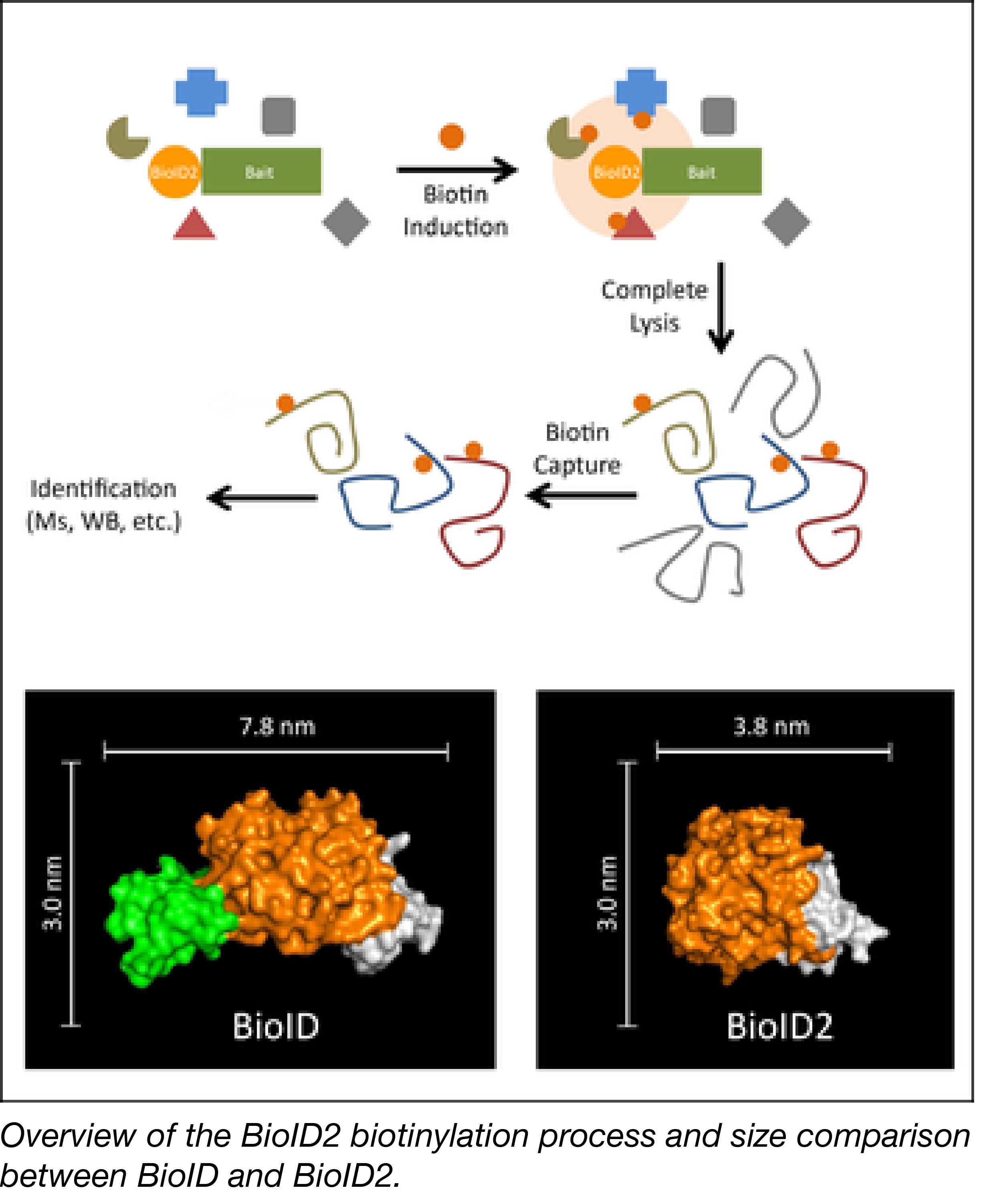 BioID2-01.png