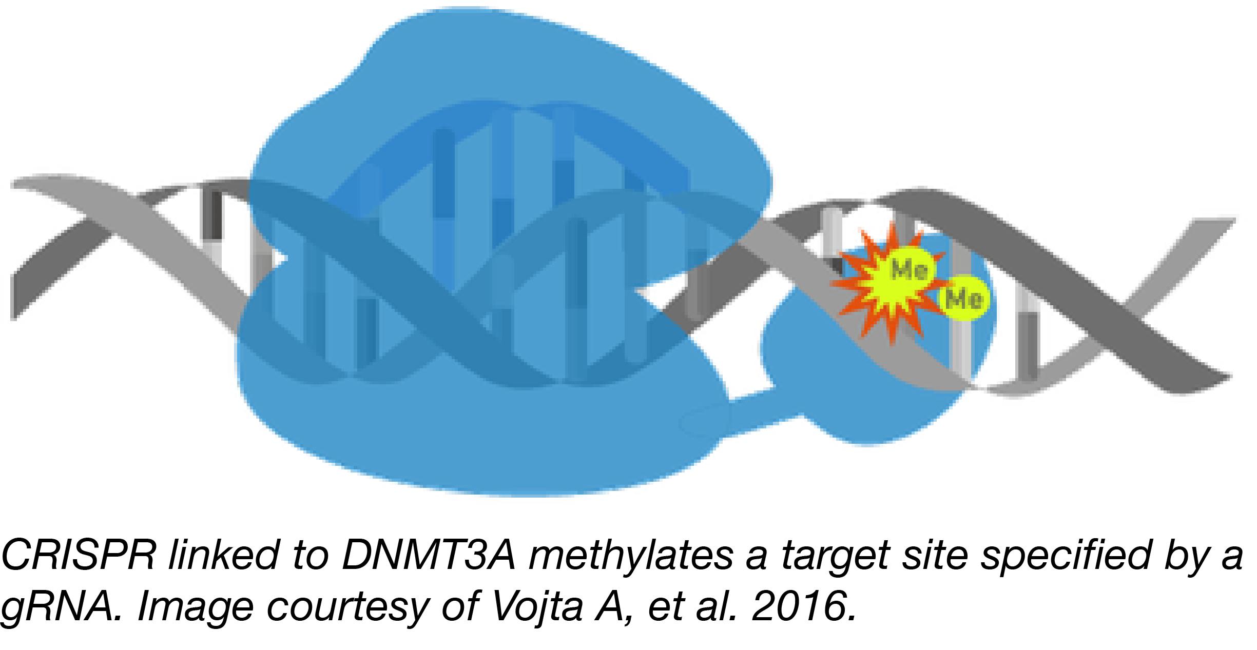 CRISPR Methylation-01.png