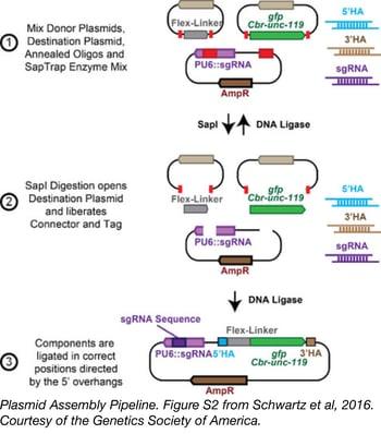 SapTrap plasmid assembly pipeline