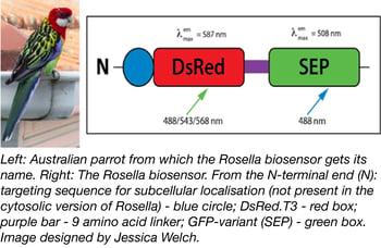 Rosella biosensor