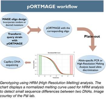 pORTMAGE workflow