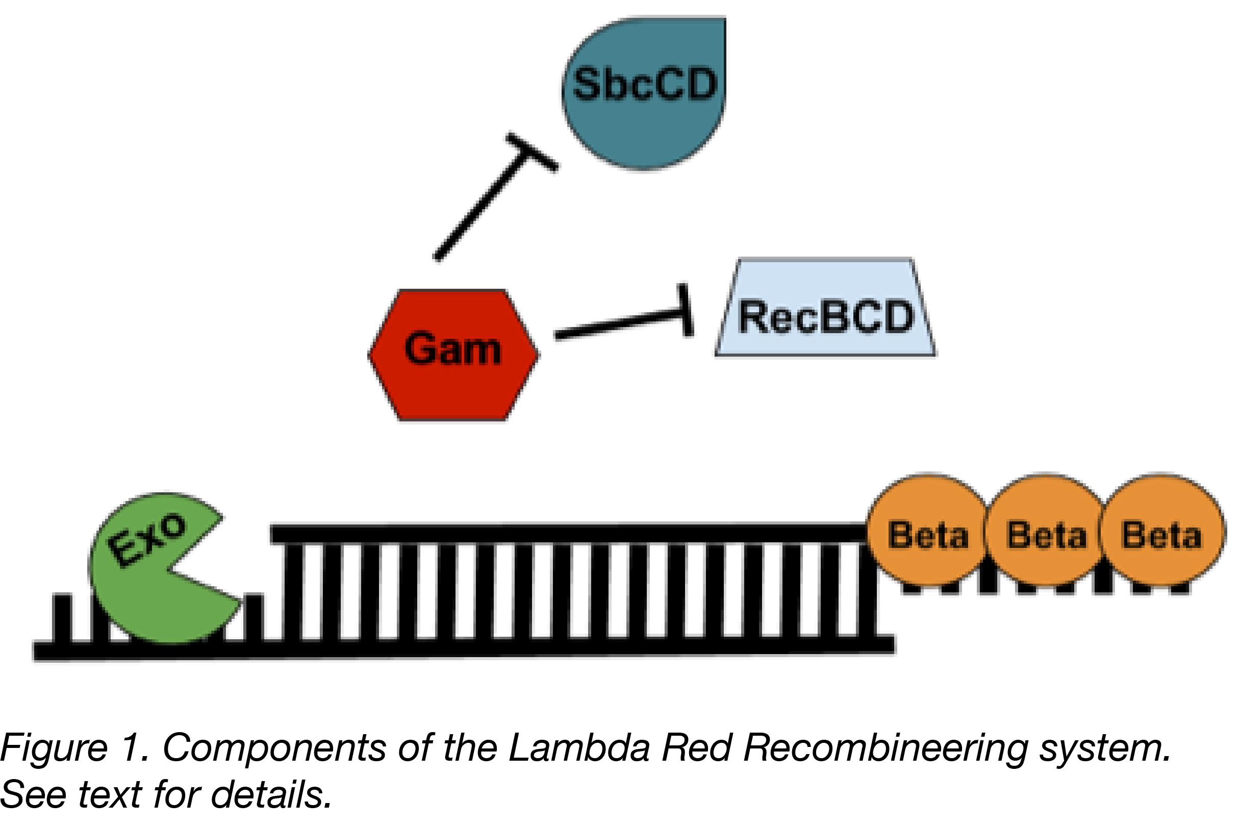 Lambda Red Components