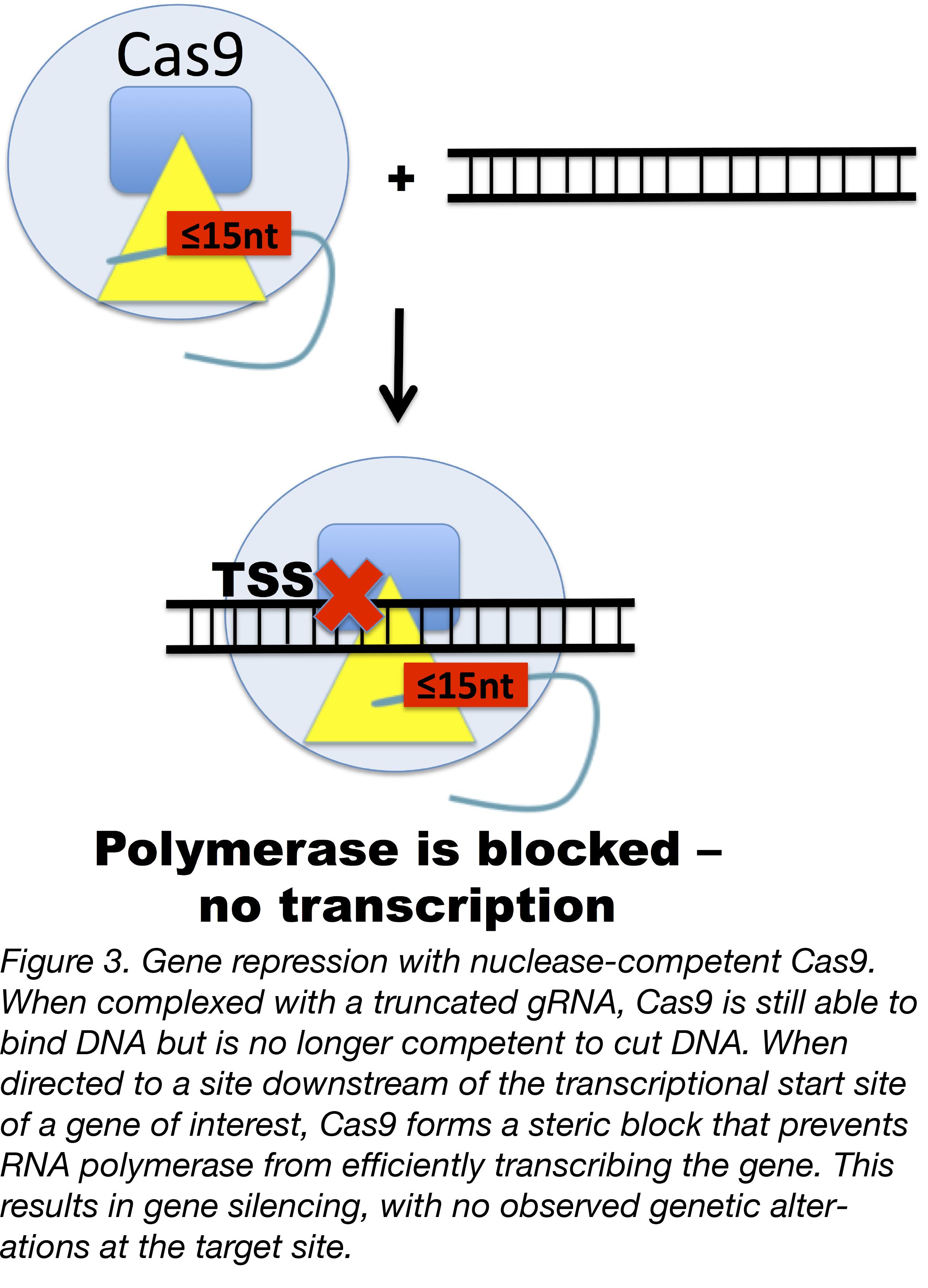 Truncated gRNAs Figure 3-01.png