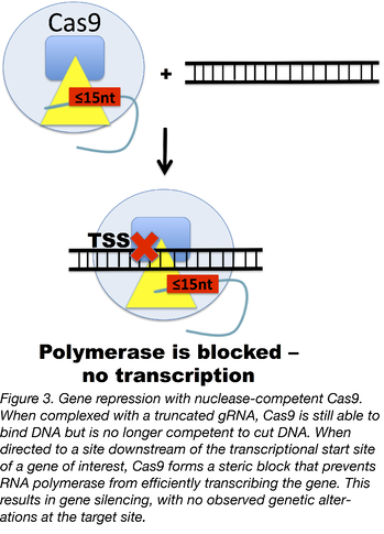 gene repression with nuclease-competent Cas9