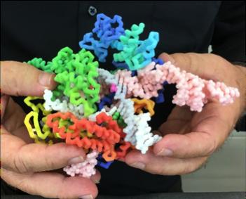 Flexible CRISPR Structure.png