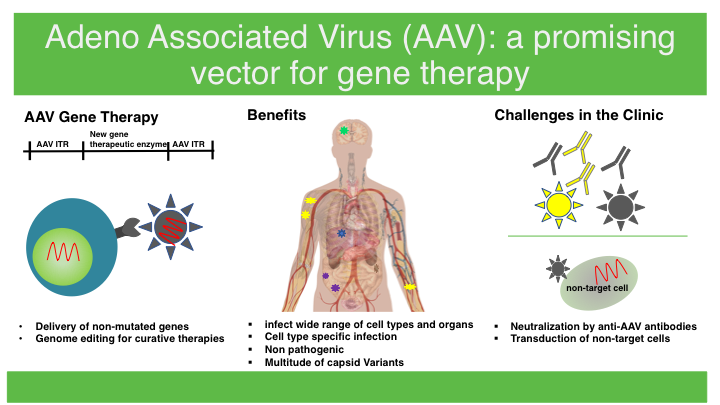 AAV Gene therapy infographic