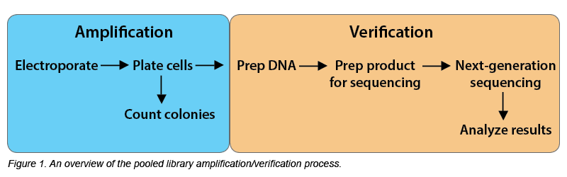 NGS Library Prep Schematic