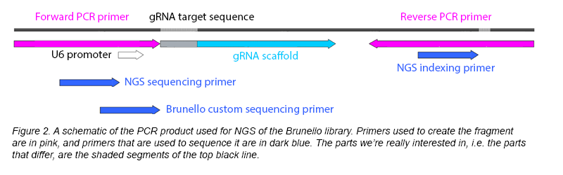 NGS Library PCR Schematic