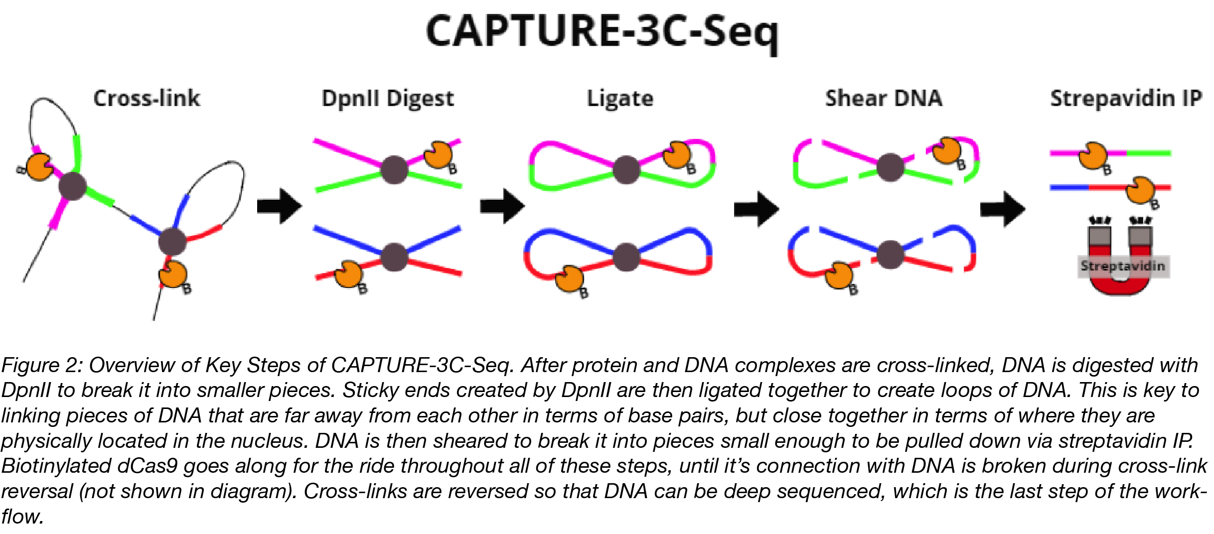 CAPTURE-3C-Seq