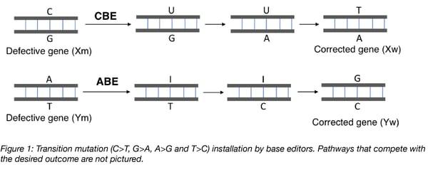 Cytosine Adenine Base Editors