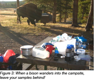 bison wanders into campsite leave samples behind
