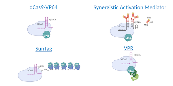 CRISPR activators overview including dCas9-VP64, Synergistic activation mediator, SunTag, and VPR