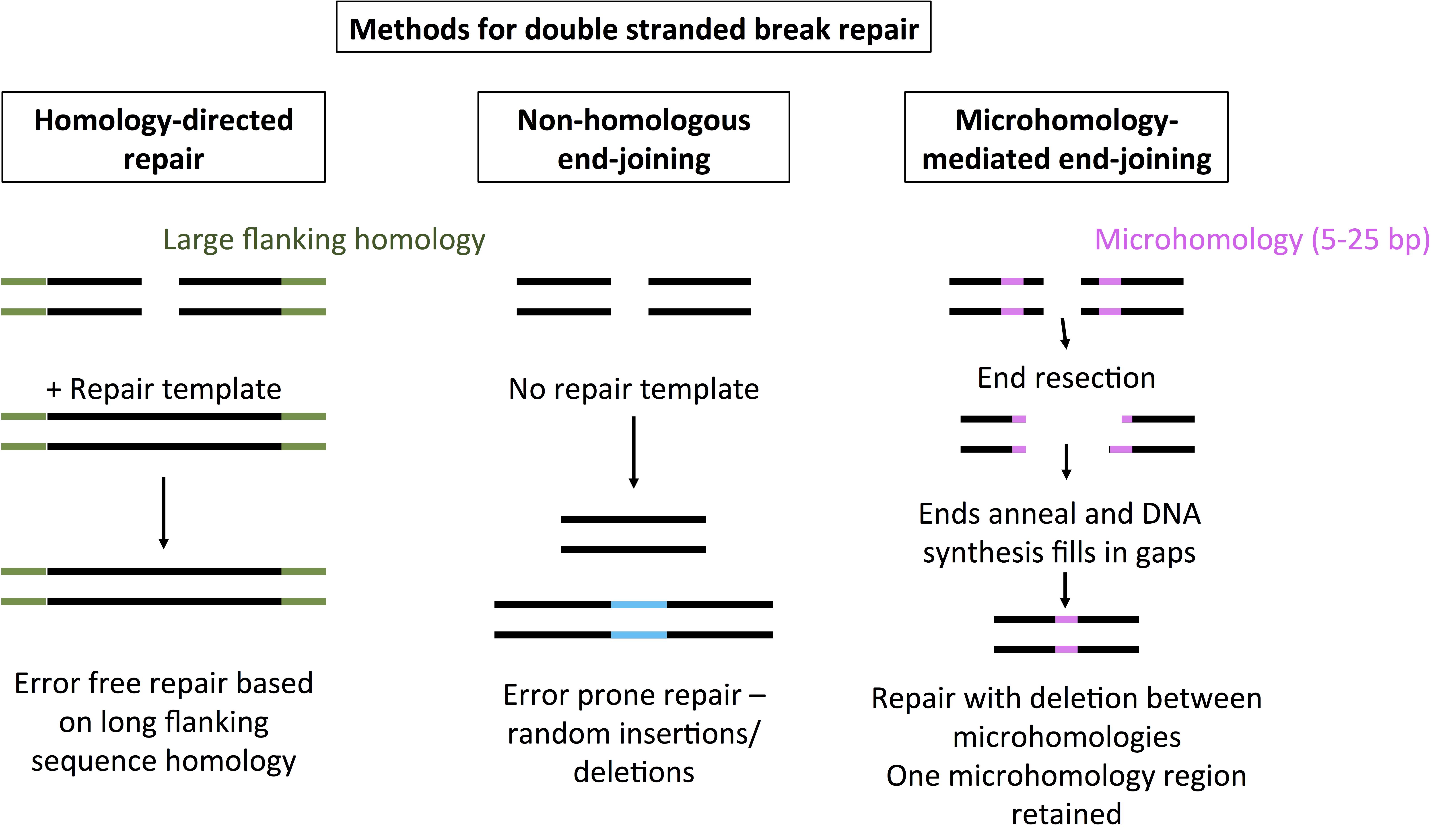 Comparing_Methods_for_DSB_Repair.png