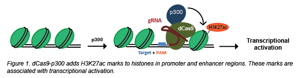 CRISPR-acetylation.png