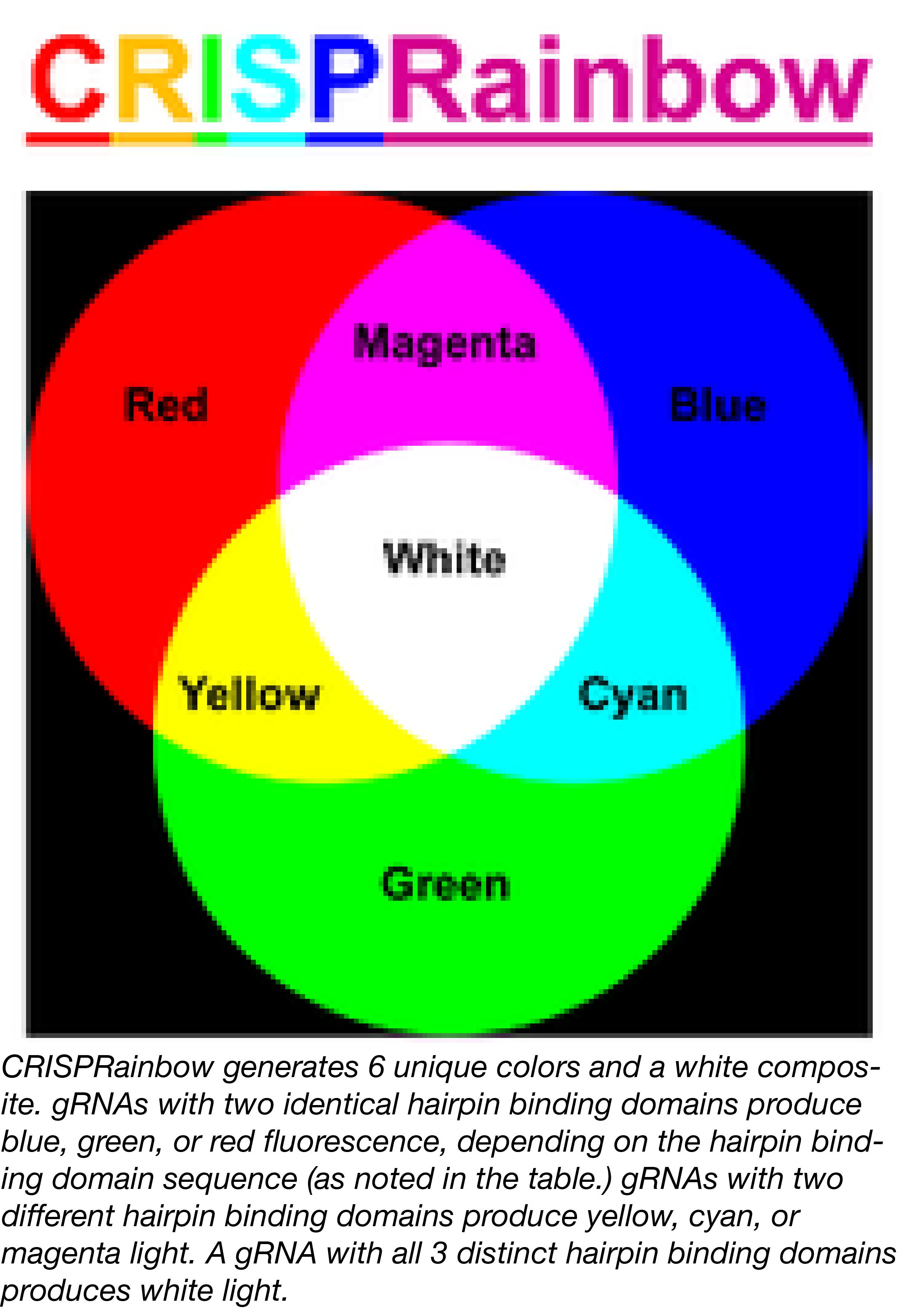 CRISPRainbow Colors