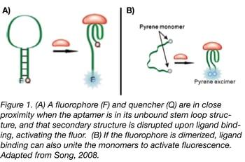 Aptamer Fluorophore