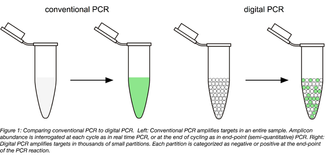 Conventional PCR shown on the left amplifies targets in entire sample. Digital PCR shown on the right amplifies targets in thousands of small partitions