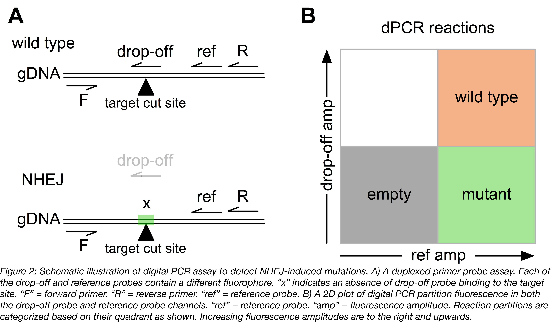 Figure 2 - NHEJ Detection-01.png