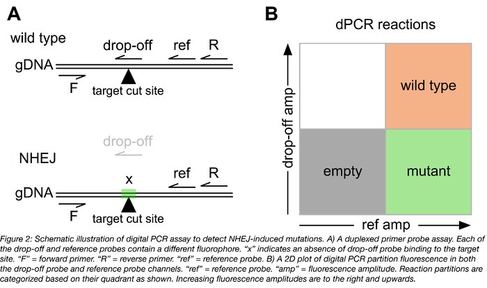 Digital PCR can be used to detect NHEJ-induced mutations