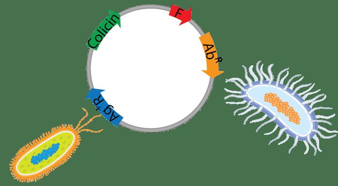 Microbial warfare