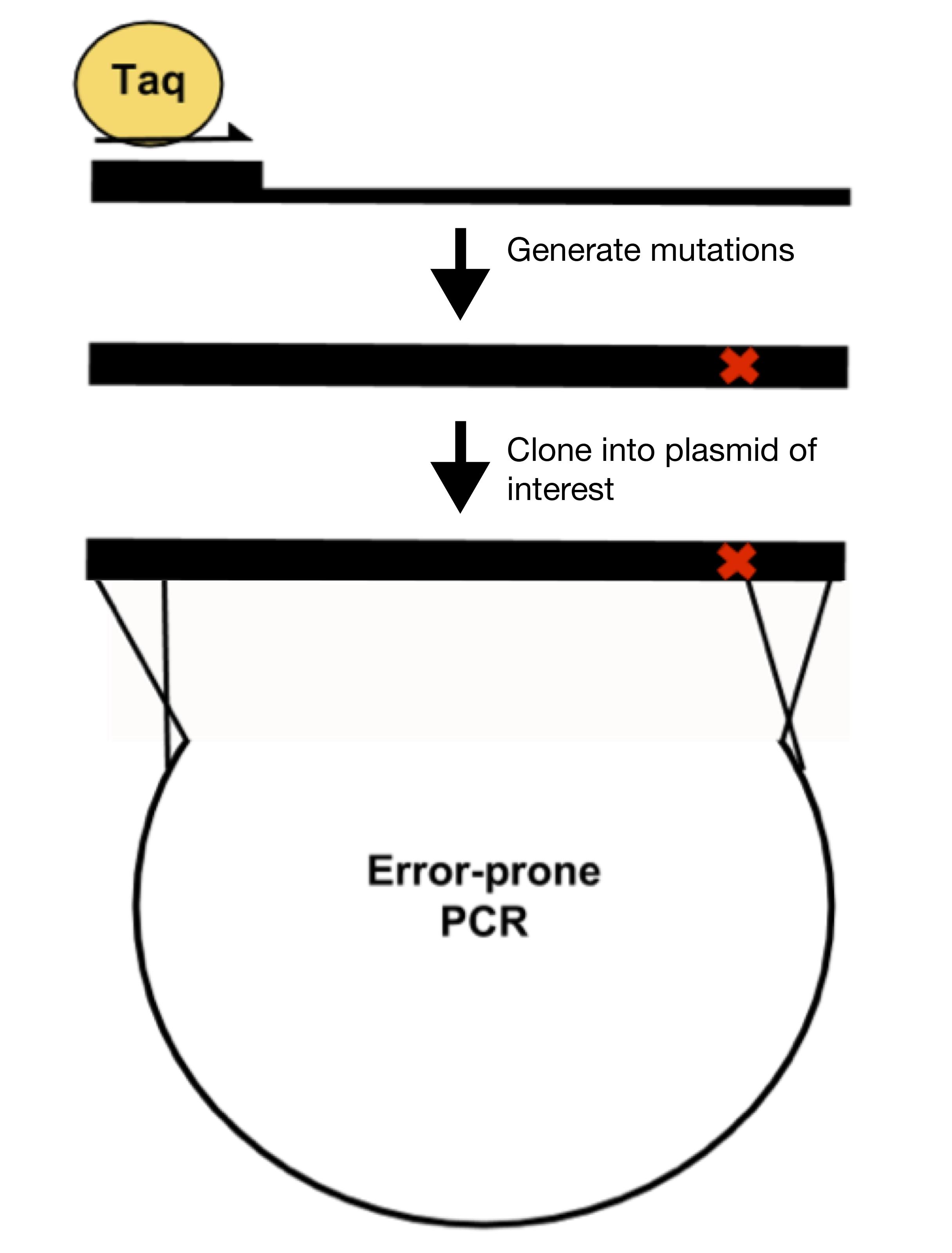 Error Prone PCR.png