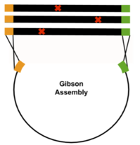 Gibson Assembly
