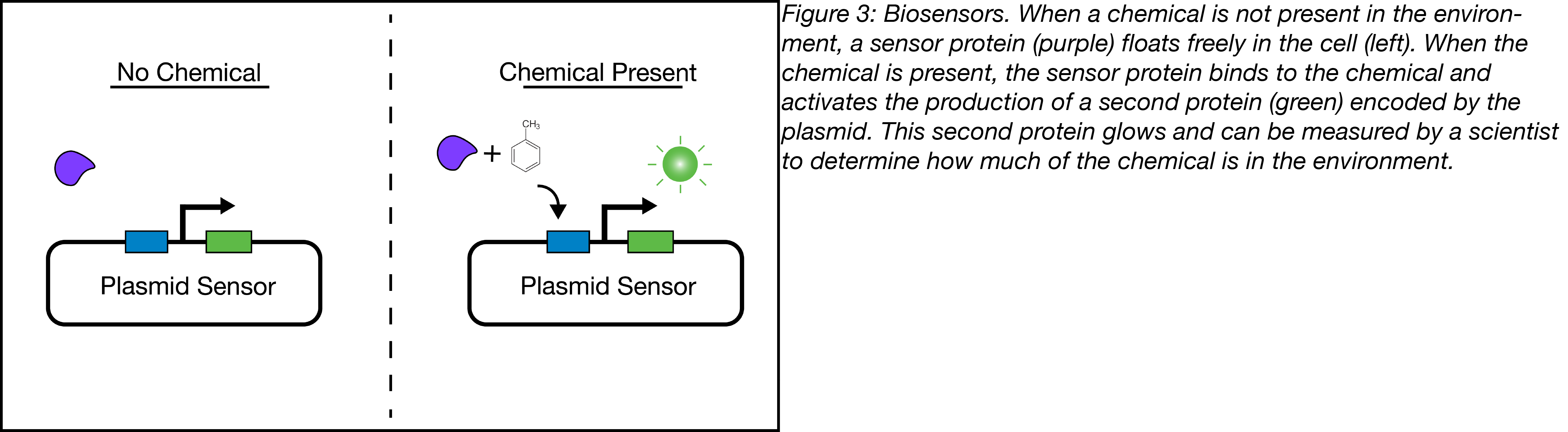 biosensors encoded on a plasmid