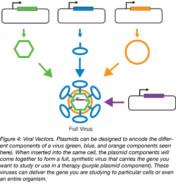 plasmids encoding parts of a viral particle