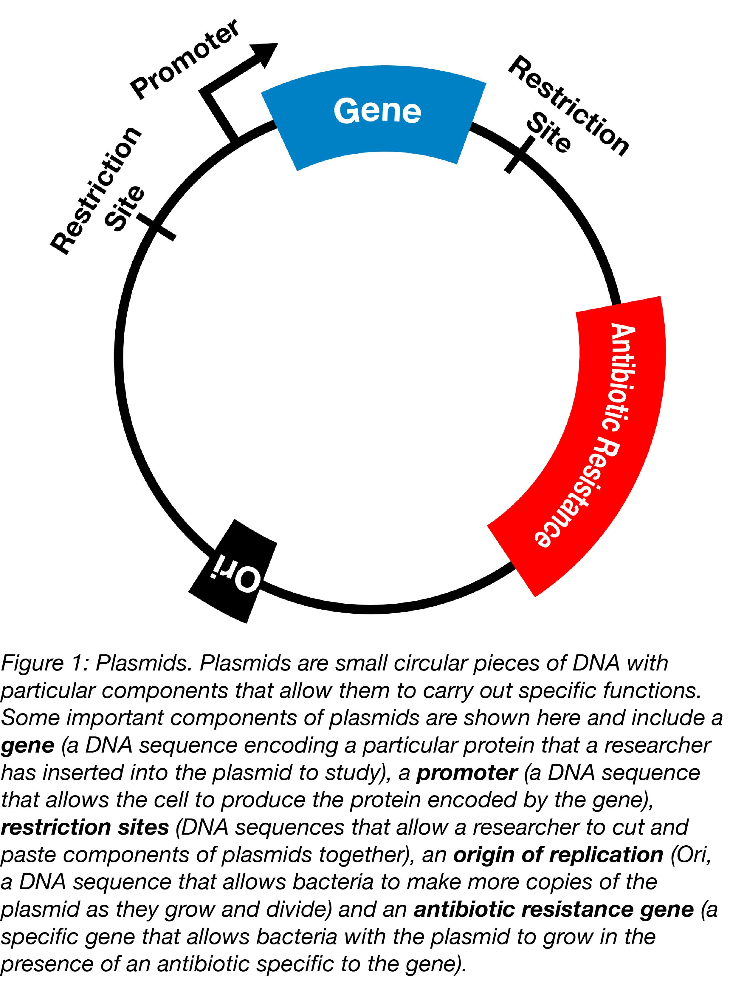 simple plasmid