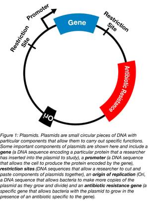 parts of a plasmid