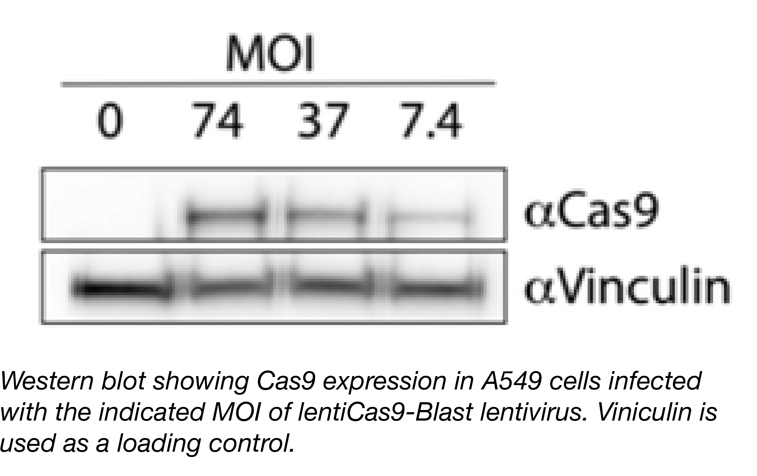 Cas9 Expression with description.png
