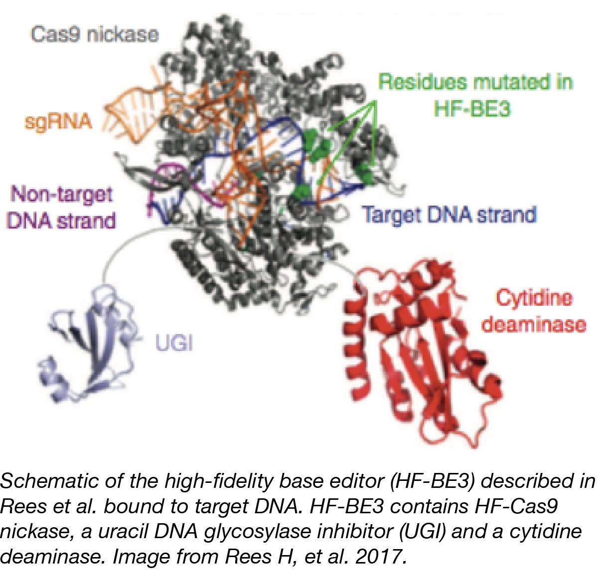CRISPR Base Editors