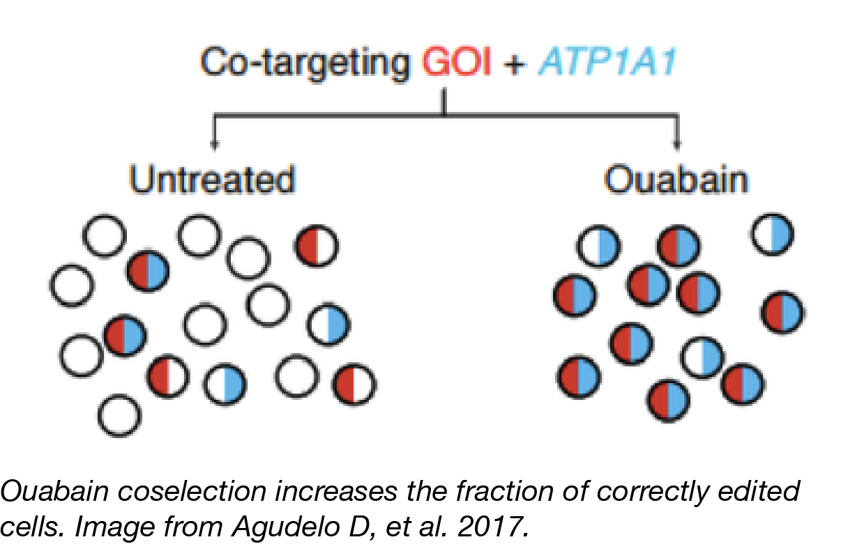 CRISPR Coselection with Ouabain