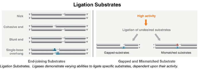 Ligation Substrates-01.png