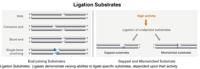 Ligation Substrates