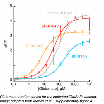 glutamateTitrationCurves-01.png